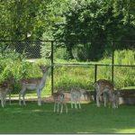 Nieuws stichting dierenweide Stroomdal